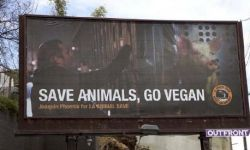 杰昆·菲尼克斯登公益广告牌,呼吁大家:少吃肉享受素食生活