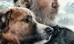 """《野性的呼唤》国内改档待映:""""一条有主角光环的狗"""""""