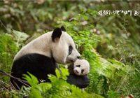 多部国产自然题材纪录片上映,对焦美丽中国