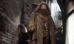 《神奇动物3》或将有更多《哈利波特》中角色出现