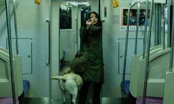 日本悬疑暴力强片《看不见的目击者》,吉冈里帆挑战高难度演技扮盲人