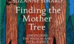 《寻找母亲树》将拍电影 艾米亚当斯联袂吉伦哈尔