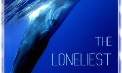 纪录片《最孤独的鲸:寻找52》:聚焦52赫兹鲸的海洋传说