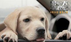 电影《忠犬流浪记》定档8月20日 温情上映感动你我