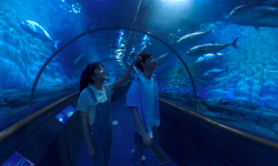电影《时光投影里的秘密》7月30日全国零号空间VR影院上映