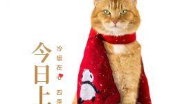 动画电影《流浪猫鲍勃2》曝上映海报,原型橘猫鲍勃银幕绝唱