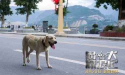 电影《忠犬流浪记》制片人发亲笔信 希望更多人关爱流浪犬