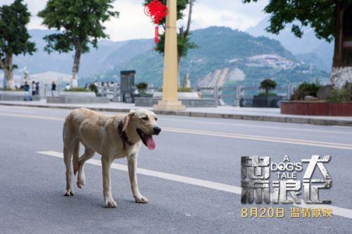 电影《忠犬流浪记》主题曲MV上线浓浓人狗情引广泛共鸣