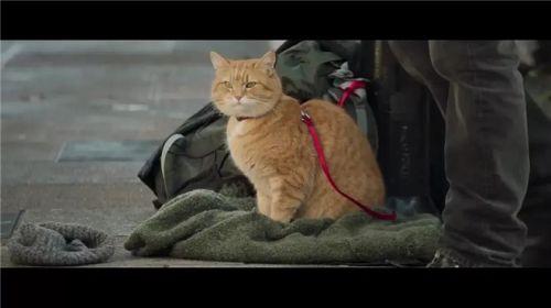 英国电影《流浪猫鲍勃2:鲍勃的礼物》热映网红橘猫惹人爱
