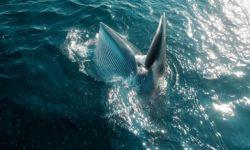 纪录片《蔚蓝之境》全景式地展示我国近海海域的自然生态