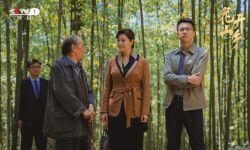 电视剧《花开山乡》热播  聚焦生态环境问题