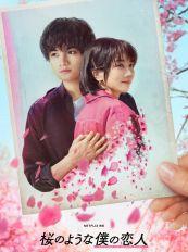 Netflix原创爱情电影《我的樱花恋人》定档2022年3月24日上线